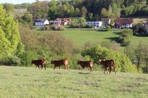 vier Rinder auf der Weide
